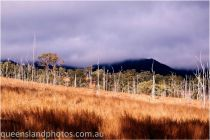 Rural near Bunya Mountains July 2010 - Julie White